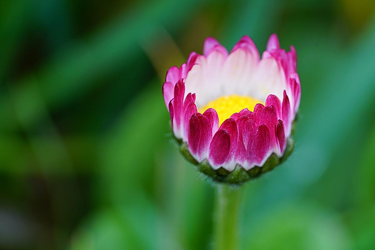 Blumen und Blüten fotografieren - ohne Zwischenringe