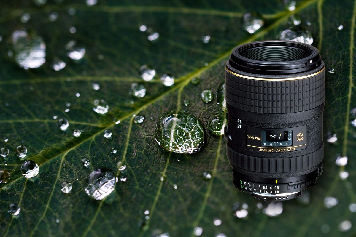 Makrofotografie für Anfänger