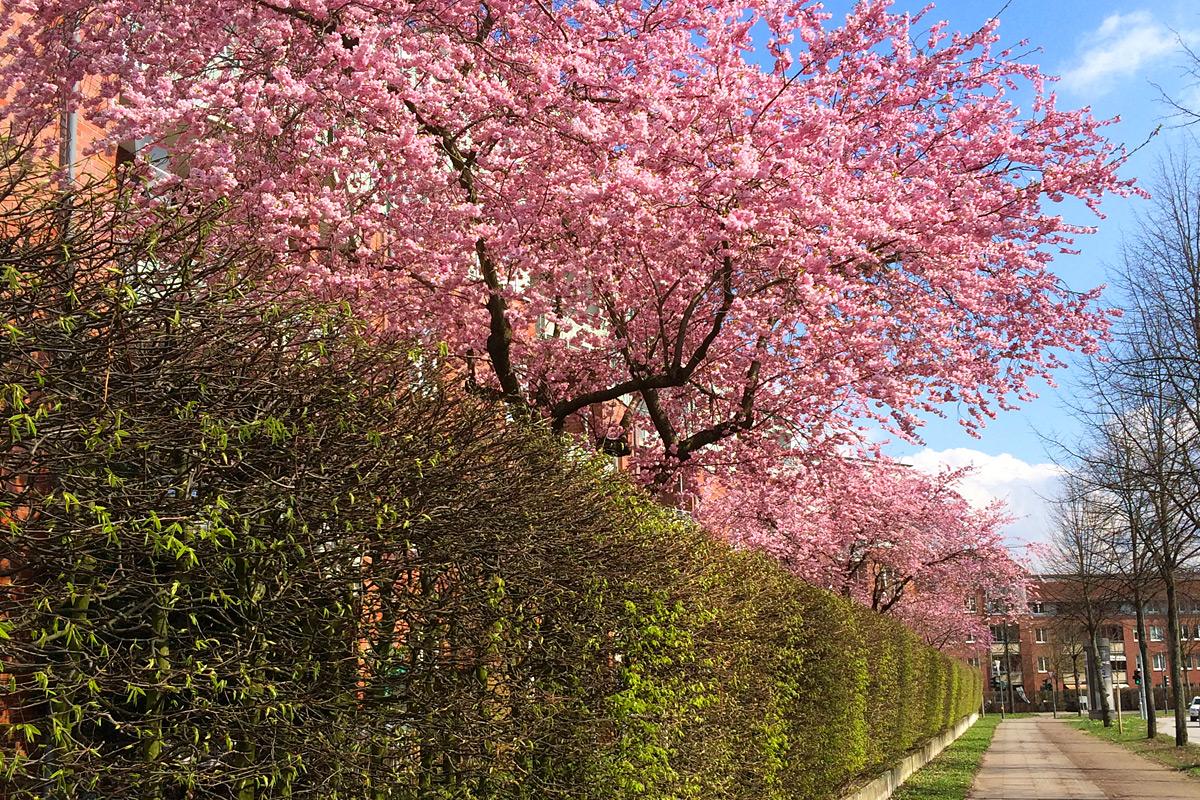 Auf Linie: Frühling in Hamburg