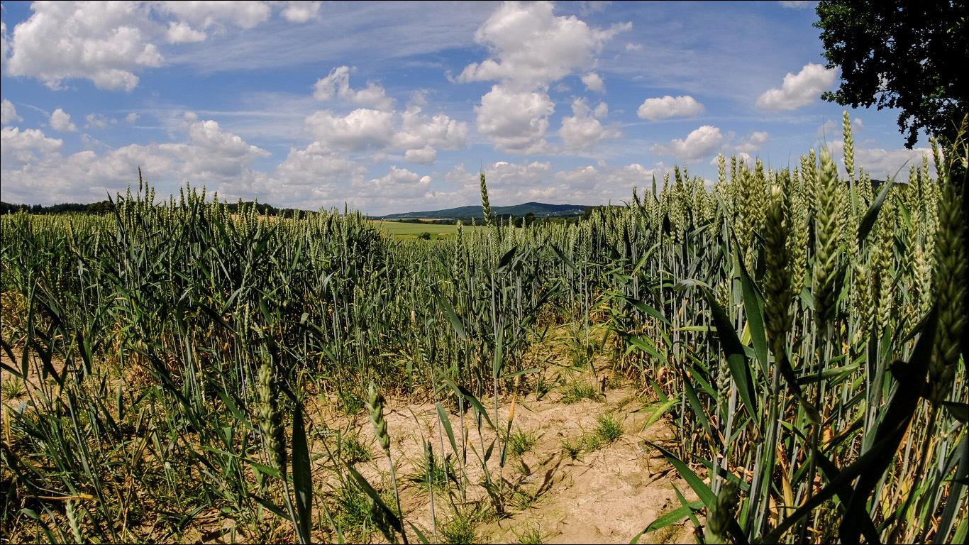 Landschaftsfotografie mit Meike Fisheye Objektiv