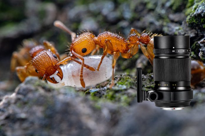 1:1 bis 5:1 Vergrößerung: Zhongyi Mitakon Creator 85mm f/2.8 1-5X Super Makroobjektiv